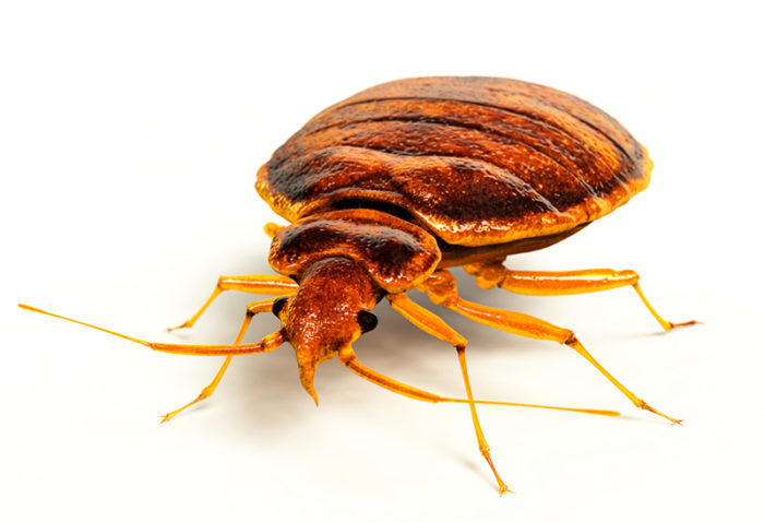 Fort Worth Bed Bug Control